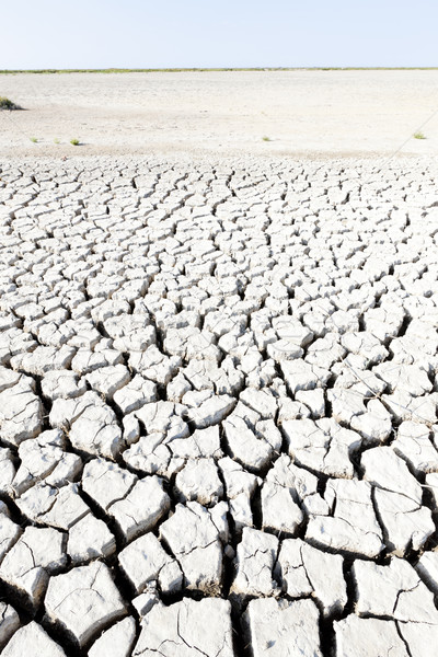 dry land, Parc Regional de Camargue, Provence, France Stock photo © phbcz