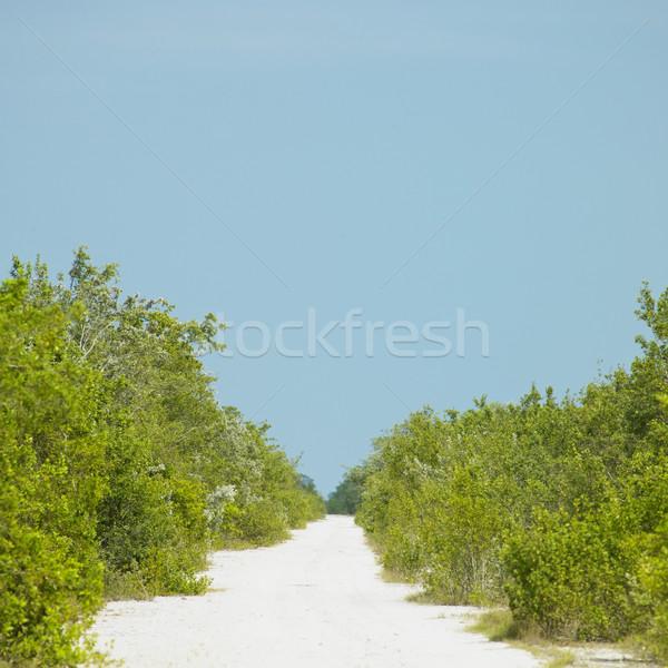 path, Cayo Sabinal, Camaguey Province, Cuba Stock photo © phbcz