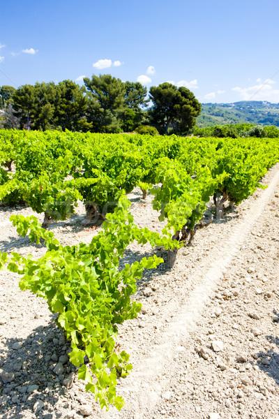 vineyard near Bandol, Provence, France Stock photo © phbcz