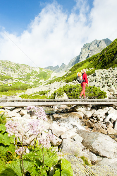 woman backpacker in Great Cold Valley, Vysoke Tatry (High Tatras Stock photo © phbcz