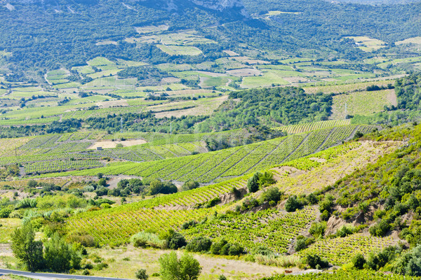 vineyars in Languedoc-Roussillon, France Stock photo © phbcz