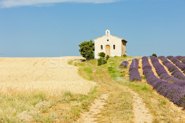 チャペル ラベンダー 穀物 フィールド 高原 建物 ストックフォト © phbcz