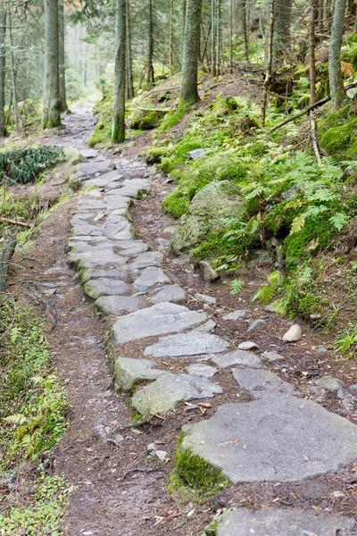 path in Vysoke Tatry (High Tatras), Slovakia Stock photo © phbcz