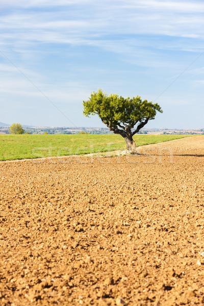 области дерево плато Франция пейзаж Европа Сток-фото © phbcz