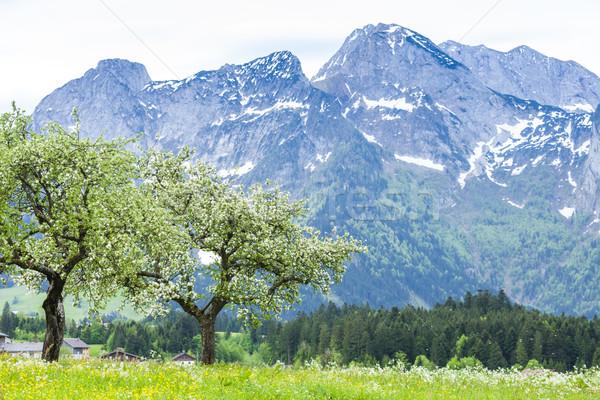 Austrian Alps near Hallstatt, Upper Austria, Austria Stock photo © phbcz