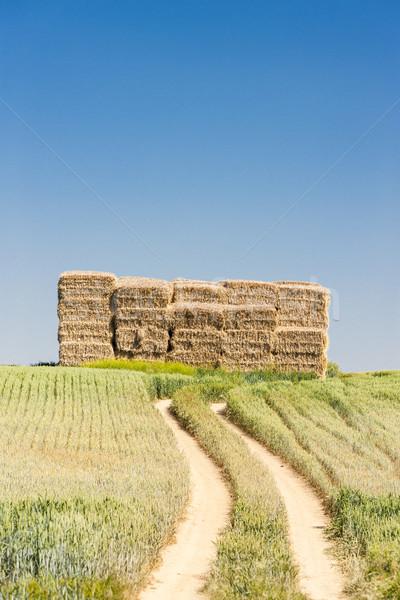 straw bales, Czech Republic Stock photo © phbcz