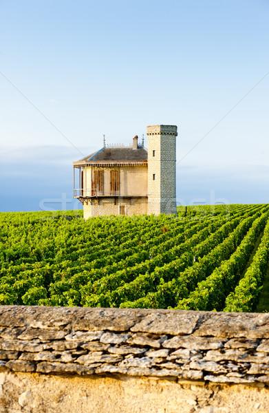 Stock photo: vineyards of Clos Blanc De Vougeot Castle, Burgundy, France