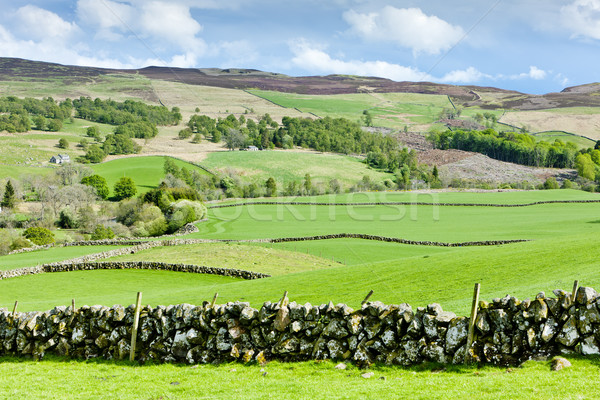 Felvidék Skócia tájkép zöld legelő természetes Stock fotó © phbcz