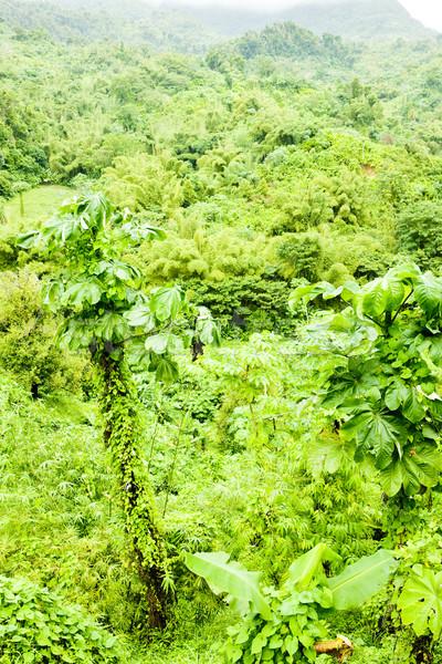 Grenada caribbean bos landschap achtergrond reizen Stockfoto © phbcz