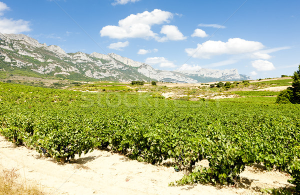 vineyards, La Rioja, Spain Stock photo © phbcz