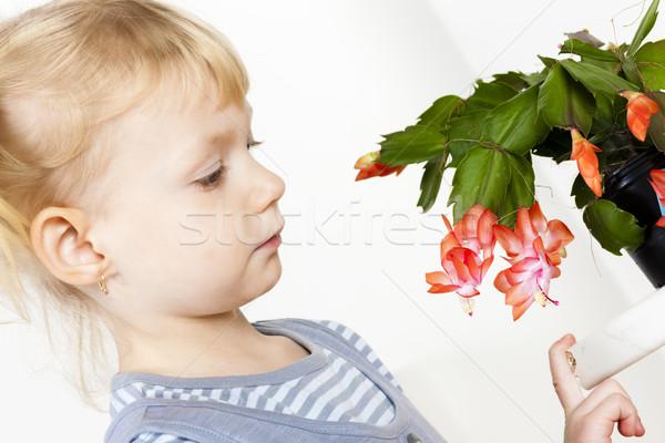 Portré kicsi karácsony kaktusz lány gyermek Stock fotó © phbcz