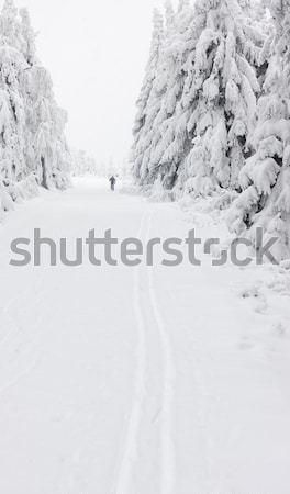 winter landscape, Orlicke Moutnains, Czech Republic Stock photo © phbcz