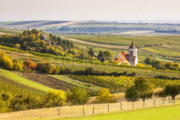 church of Falkenstein with autumnal vineyards, Lower Austria, Au Stock photo © phbcz