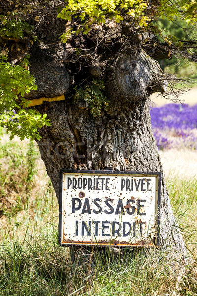 tree and lavender at background, Provence, France Stock photo © phbcz