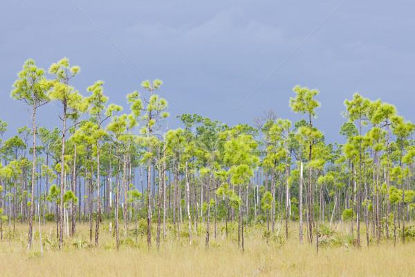 Everglades National Park, Florida, USA Stock photo © phbcz