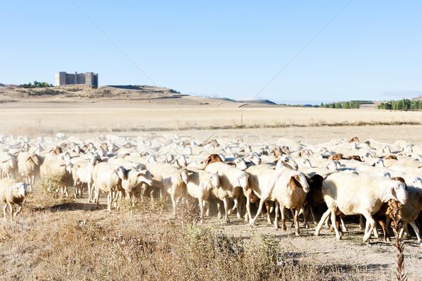 Birka nyáj Spanyolország kastély kint emlős Stock fotó © phbcz