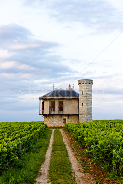 vineyards of Clos Blanc De Vougeot Castle, Burgundy, France Stock photo © phbcz