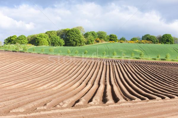 Tájkép mező Skócia Európa föld díszlet Stock fotó © phbcz