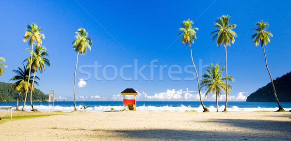 Stock fotó: Fülke · tengerpart · fa · tájkép · tenger · nyár