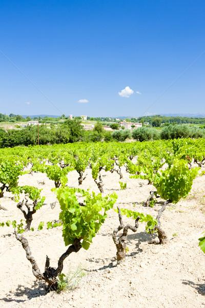 vineyards near Bandol, Provence, France Stock photo © phbcz