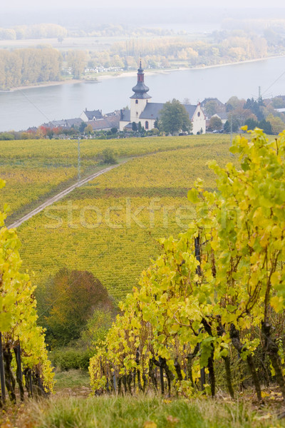 Oppenheim, Rheingau, Germany Stock photo © phbcz