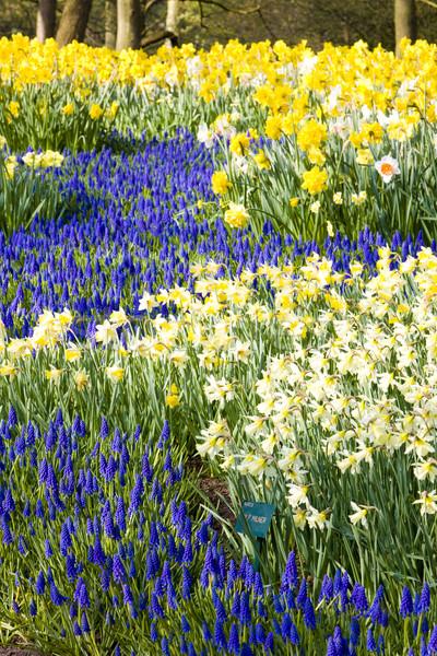 Keukenhof Gardens, Lisse, Netherlands Stock photo © phbcz