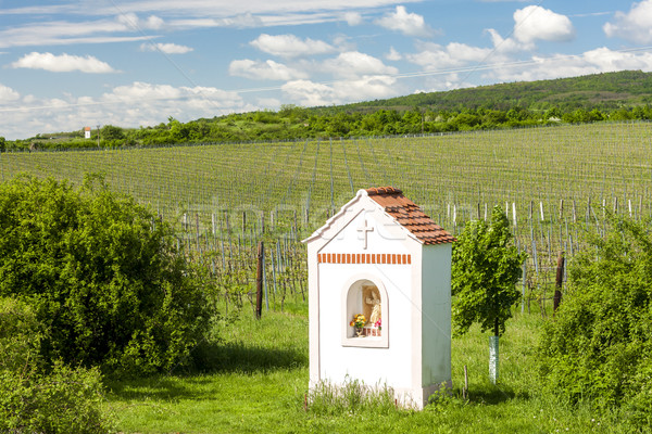 God's torture near Hnanice with spring vineyard, Southern Morav Stock photo © phbcz