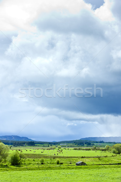 landscape of Strathspey Valley, Highlands, Scotland Stock photo © phbcz