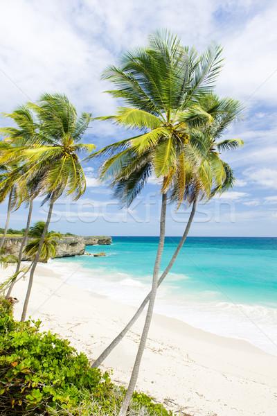 нижний Барбадос Карибы дерево пейзаж морем Сток-фото © phbcz