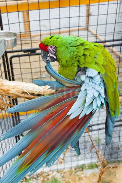 Papagáj katonaság ketrec állat természetes Stock fotó © phbcz