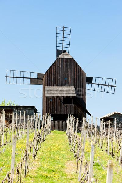Сток-фото: Windmill · виноградник · Чешская · республика · весны · архитектура