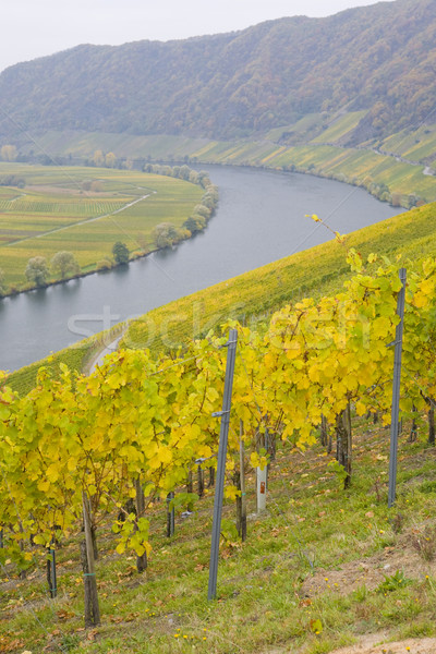 Moselle Valley, Piesport, Rheinland Pfalz, Germany Stock photo © phbcz