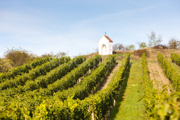 God's torture near Hnanice with vineyard, Southern Moravia, Cze Stock photo © phbcz