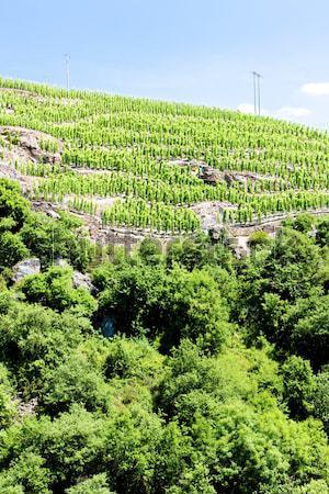 Vinha França paisagem país videira crescer Foto stock © phbcz