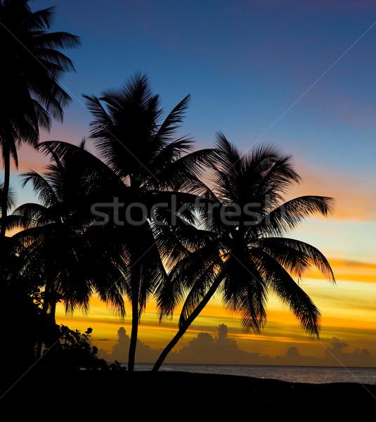 Stock fotó: Naplemente · Karib · tenger · teknős · tengerpart · fa