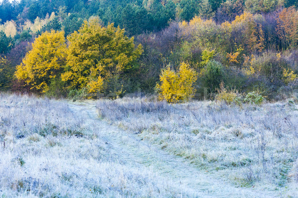 frosted autumnal meadow Stock photo © phbcz