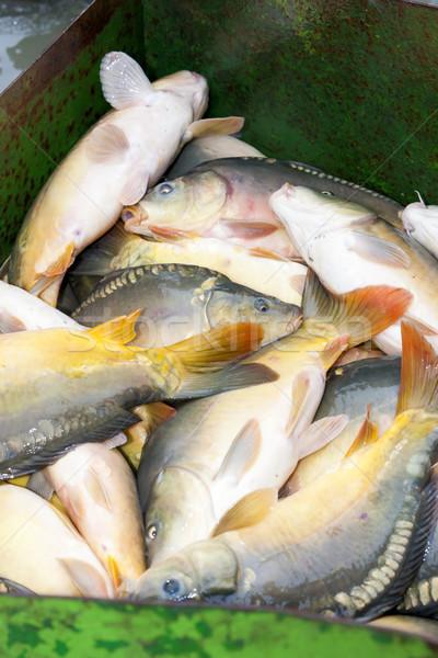 Récolte étang pêche animaux extérieur Photo stock © phbcz