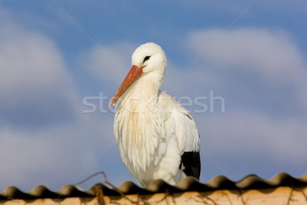 storks breeding (Centre de R Stock photo © phbcz