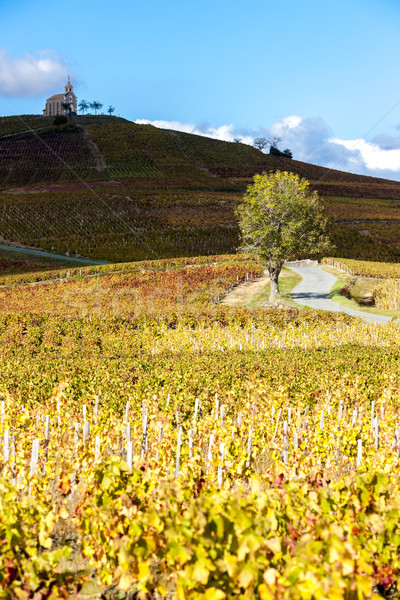 vineyards grand cru in Beaujolais witha church, Fleurie, Rhone-A Stock photo © phbcz