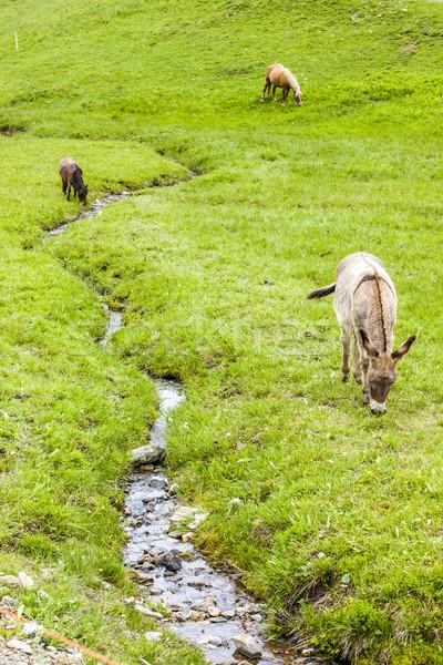 Italië land weide natuurlijke buitenshuis buiten Stockfoto © phbcz