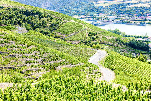 grand cru vineyards near Ampuis, Cote Rotie, Rhone-Alpes, France Stock photo © phbcz
