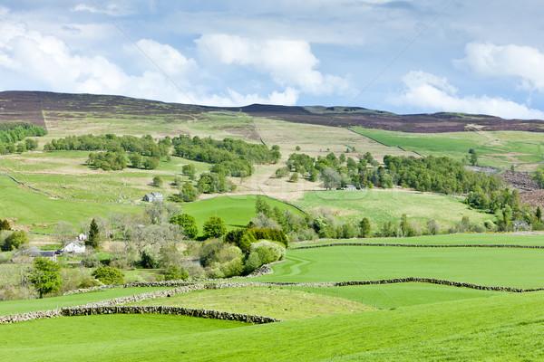 Hoogland Schotland landschap reizen weide natuurlijke Stockfoto © phbcz