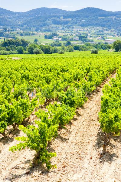 vineyards near La Cadiere d'Azur, Provence, France Stock photo © phbcz