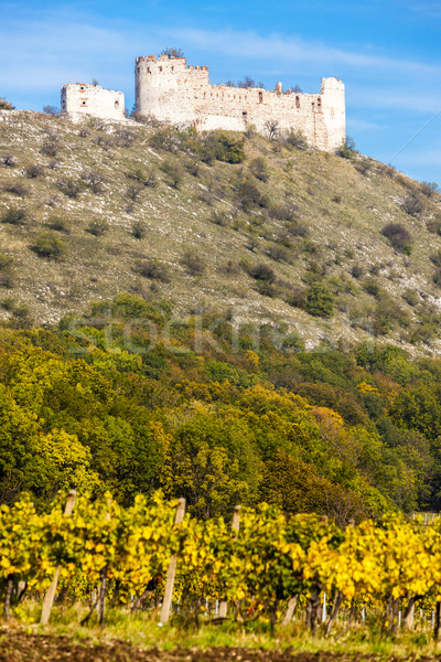 ruins of Devicky Castle with vineyard in autumn, Czech Republic Stock photo © phbcz
