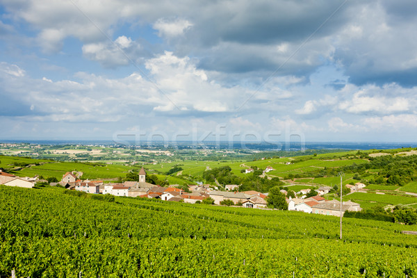 vineyards near Fuisse, Burgundy, France Stock photo © phbcz