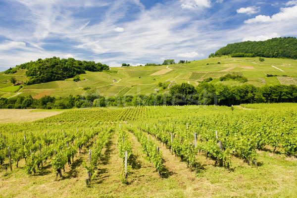 vineyards near Chateau Chalon Stock photo © phbcz