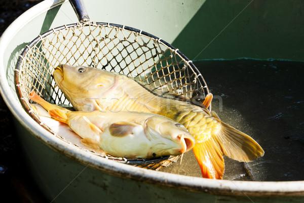 Aratás tavacska hal halászat kint épületkülsők Stock fotó © phbcz