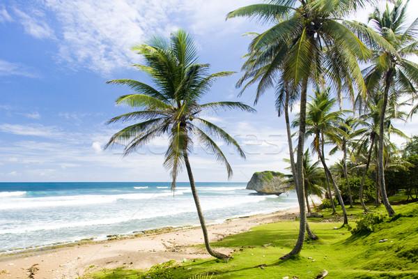 Oost kust Barbados caribbean boom landschap Stockfoto © phbcz