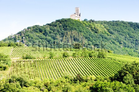 castle Kaysersberg with vineyard, Alsace, France Stock photo © phbcz