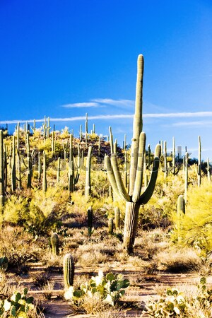 Park Arizona USA tájkép sivatag kaktusz Stock fotó © phbcz